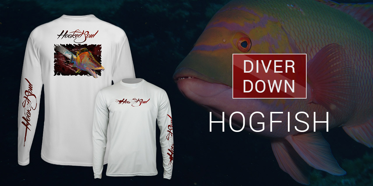 Diver-Down-HogFish